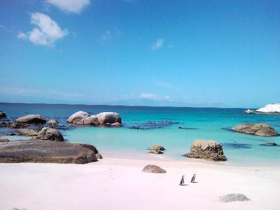 Boulders Bay penguins - Cape Town SA