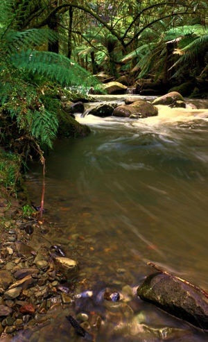 Erskine River Upper Reaches    This was taken after severe coastal flooding in the otway rivers and streams.     Location: Lorne Victoria Australia  Photographer: Darryl Fowler