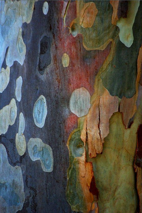 colour hues of Australian Spotted Gum Tree Bark