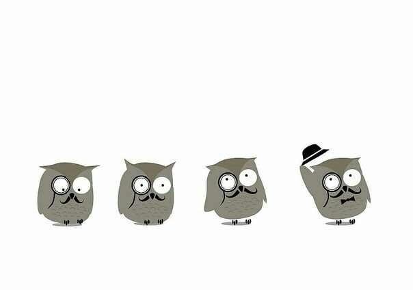 51 melhores imagens de for yu no pinterest corujas animais e como owls fandeluxe Choice Image