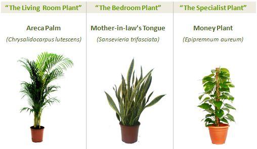 greenspaces three plants