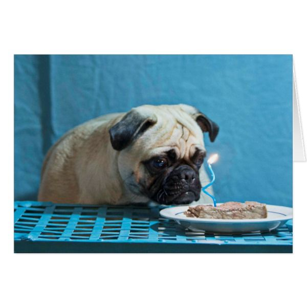 Best 25+ Happy Birthday Pug Ideas On Pinterest