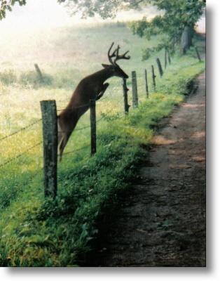 Fence jumper