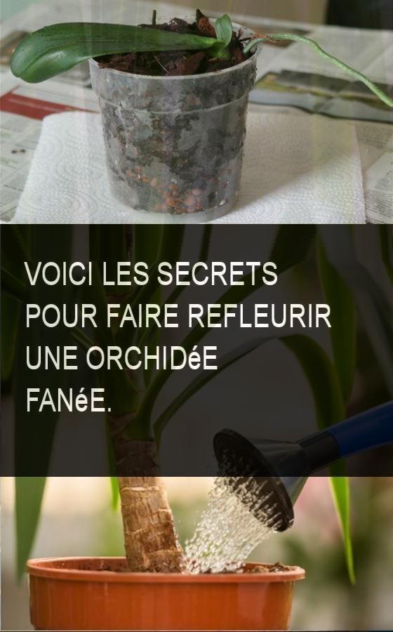 voici les secrets pour faire refleurir une orchid e fan e astuce jardin pinterest faire. Black Bedroom Furniture Sets. Home Design Ideas