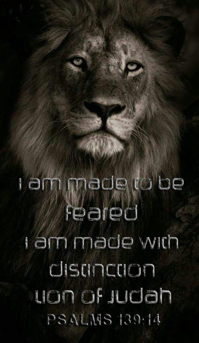 I Will Be Feared King Of Judah Pinterest Lion Wallpaper Lion
