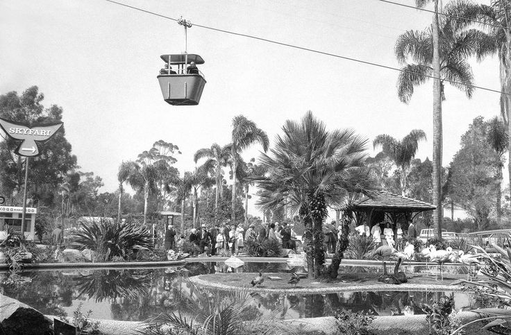 High adventure at the Zoo: Opening day for Skyfari was March 20, 1969, with a media event and ribbon cutting ceremony. The views from the first gondola off to the far side of the Zoo were enjoyed by radio and television personality Art Linkletter; Sam Lofting, San Diego deputy mayor; GeorgiAnn Amaguin, representing the children of San Diego; and Pat Johnson, a Western Airline stewardess.