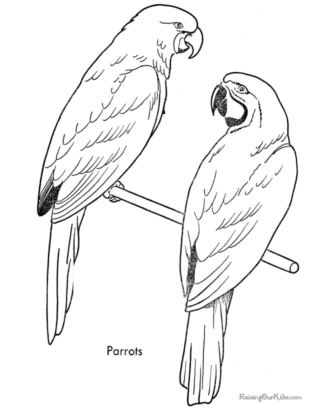 Free Pictures Of Animals Bird Coloring Pages All About For Kids