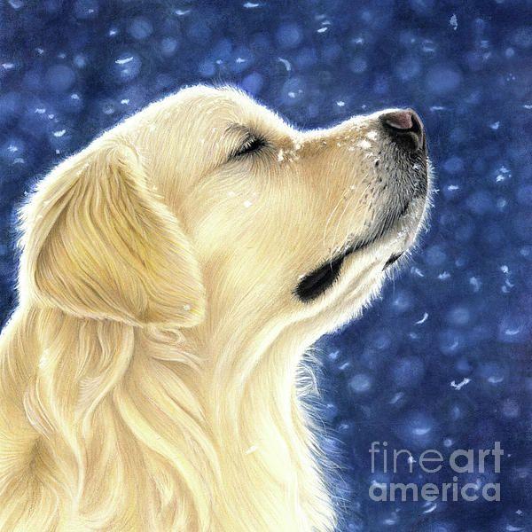 Magic Moment Dogs Golden Retriever Dog Portraits Golden