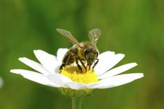 Plants & Flowers That Keep Wasps & Bees Away | eHow