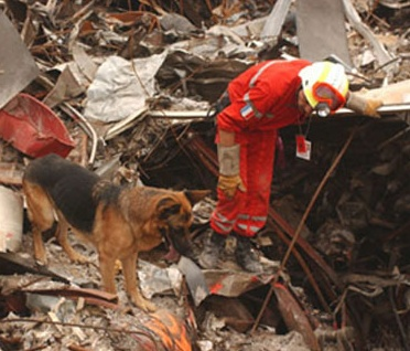 Search And Rescue Dog Training Schools California