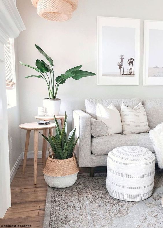 Snake plants and seagrass baskets! Perfect match! Shop this look at www.artiplanto.com  #livingroomideas #lightandbright #livingroomgoals ⠀