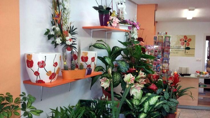 La #floristería de #RamónLuque | ramonluque.es