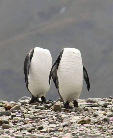 Premiação escolhe fotos mais engraçadas da vida selvagem | Virgula