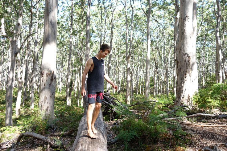 📍Karri Forest, Boranup, WA