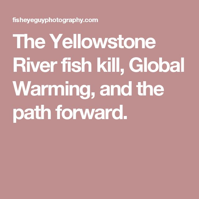 The Yellowstone River fish kill, Global Warming, and the path forward.