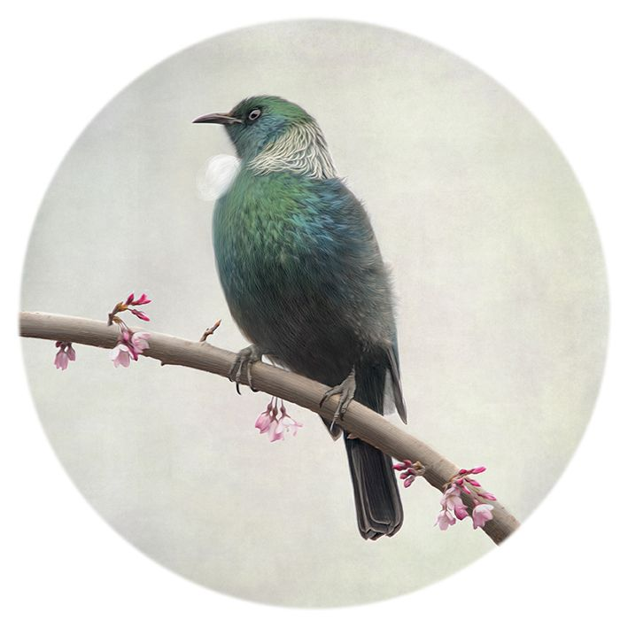 The Vigil - A New Zealand Tui keeps a cautious watch! Photograph by Nathan Secker. Art-prints and cards available from www.imagevault.co.nz