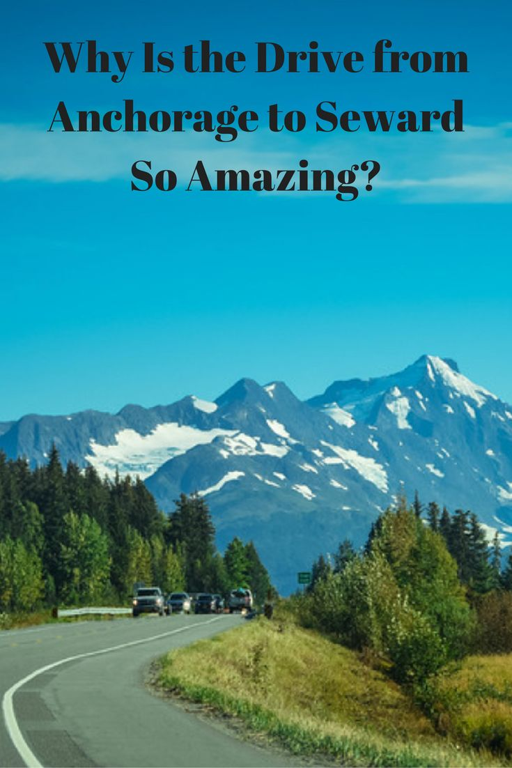If you have plans to visit Alaska for the first time, it's inevitable that you will want to head out and explore everything this beautiful state has to offer. Trust us when we say, there is A LOT to see! Before heading into the hidden depths of northern and central Alaska, consider taking a drive from Anchorage to Seward along the coastal highway to enjoy a plethora of reasons that will entice you to this part of the state.