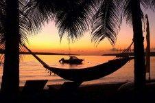 Trees and Fishes sunset in Vanuatu