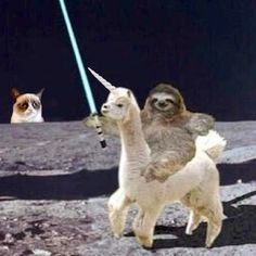 Grumpy cat, a sloth riding a unicorn AND a light saber! Don't get better than that!