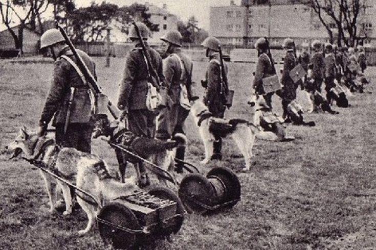 Dogs in the pre-war Polish Army (1918-1939). Psy w przedwojennym Wojsku Polskim (1918-1939)