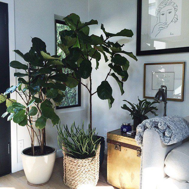 La végétation s'installe dans vos intérieurs. - 100 Idées Déco