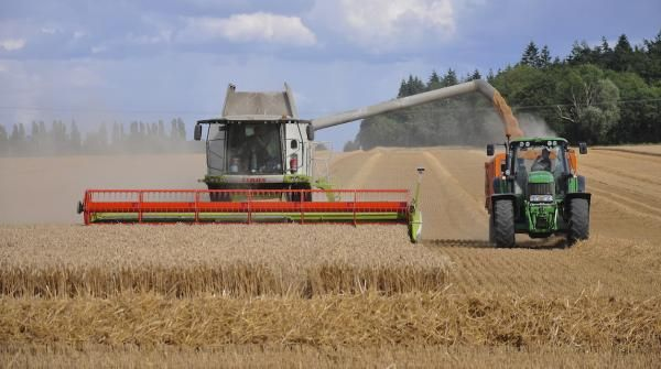 Celiac.com: Can Production Cuts Stop Plummeting Wheat Prices?