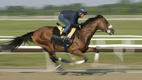 Barbaro - who could forget his valiant struggle?