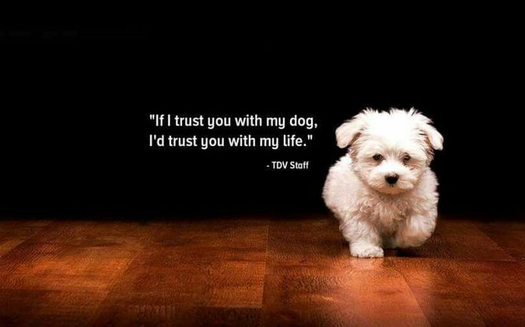 This is so true...no one gets to Harley if I do not trust you enough with my life first....