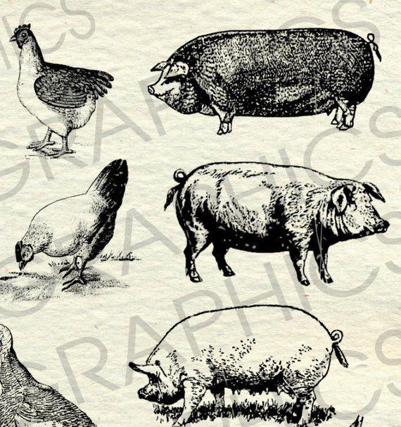 Vintage Farm Animal Illustrations Printable Farm Animals Clipart Farm Animals Vector Country Farm Animals Clipart Copyright Free Animal Illustration Animal Clipart Farm Animals