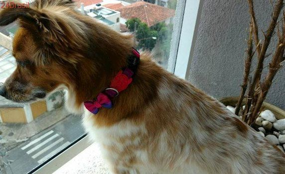 Em SP, cadela não é recebida em pet shop por não ser de raça