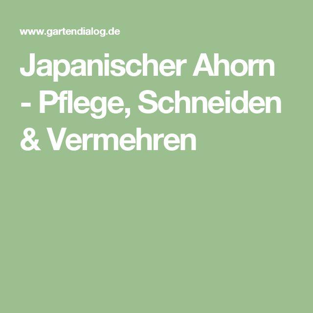 die besten 25 japanischer ahorn ideen auf pinterest japanischer ahorn garten japanischer. Black Bedroom Furniture Sets. Home Design Ideas