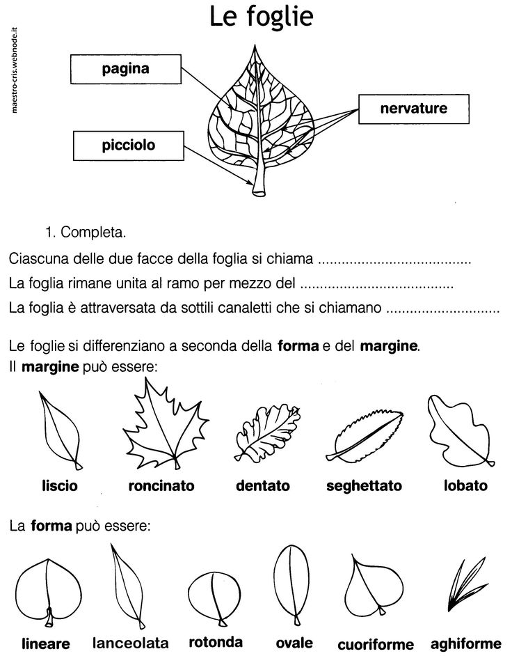 le foglie forma e margine classe seconda.jpg