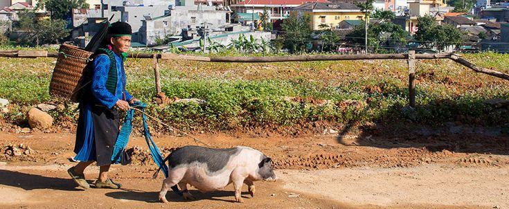 Ha Giang - Dong Van town. #vietnam #hagiang #dongvan #ethnic #travel #wandering