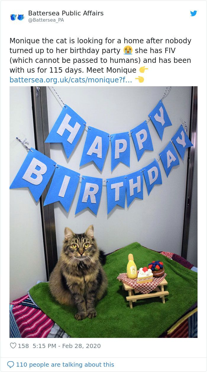 Shelter Workers Organize This Cat S Birthday Hoping Someone Will