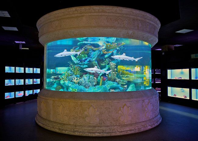 Who Wouldnt Want A Shark Tank Like This In Their House