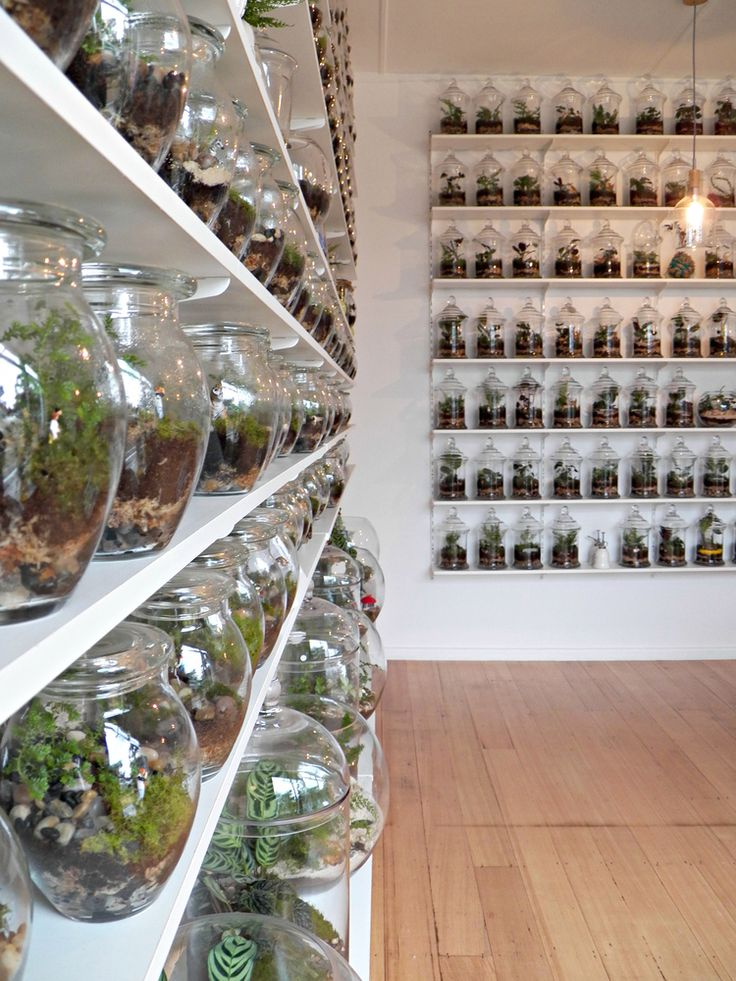 A terrarium boutique store? In my dreams! (it will probably stay in my dreams because it is in Melbourne but it's great to know such a place exists)