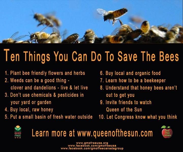 how to help bees in australia