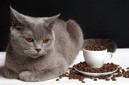 8 alimentos peligrosos para los gatos | EROSKI CONSUMER.   8 alimentos peligrosos para los gatos | EROSKI CONSUMER. Café, cebolla, vísceras de pescado y sal son comidas prohibidas para los felinos, ya que destruyen sus glóbulos rojos y les causan diarrea, intoxicaciones y puede que hasta la muerte.    http://www.consumer.es/web/es/mascotas/perros/alimentacion/2013/06/13/216937.php