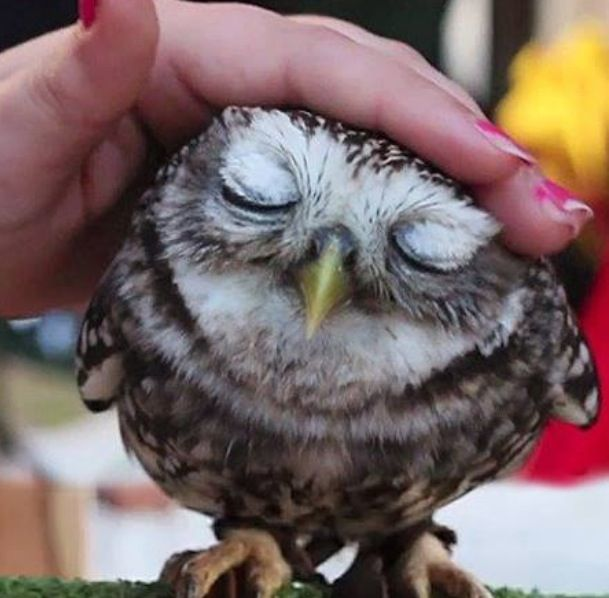 OMG ... OWL! I need one of these!