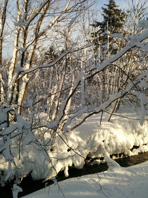 A winter wonderland in my backyard this morning : )