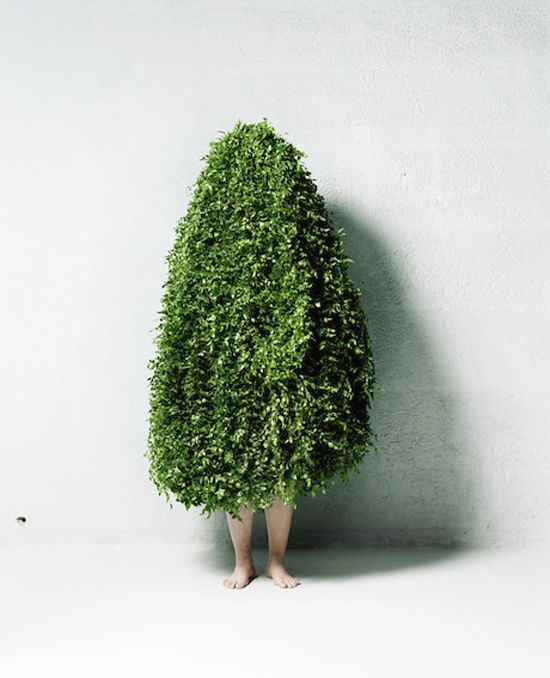 makoto azuma...leaf man