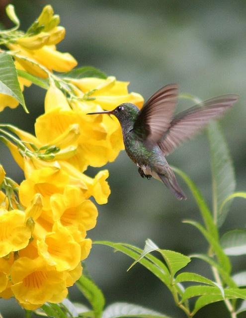 Quando acordo de manhã Beija-flor no meu jardim E sinto o sol dourar a minha pele E é tão bom Penso em ti!!