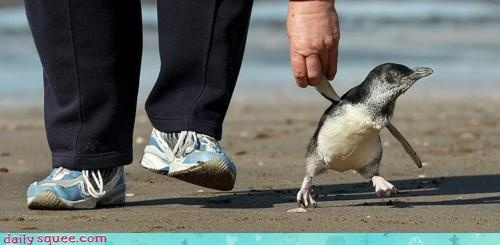 lucky lucky manThe Roads, Funny Stuff, Adorable, Penguins, Helpful Hands, Things, Life Goals, Animal, Holding Hands