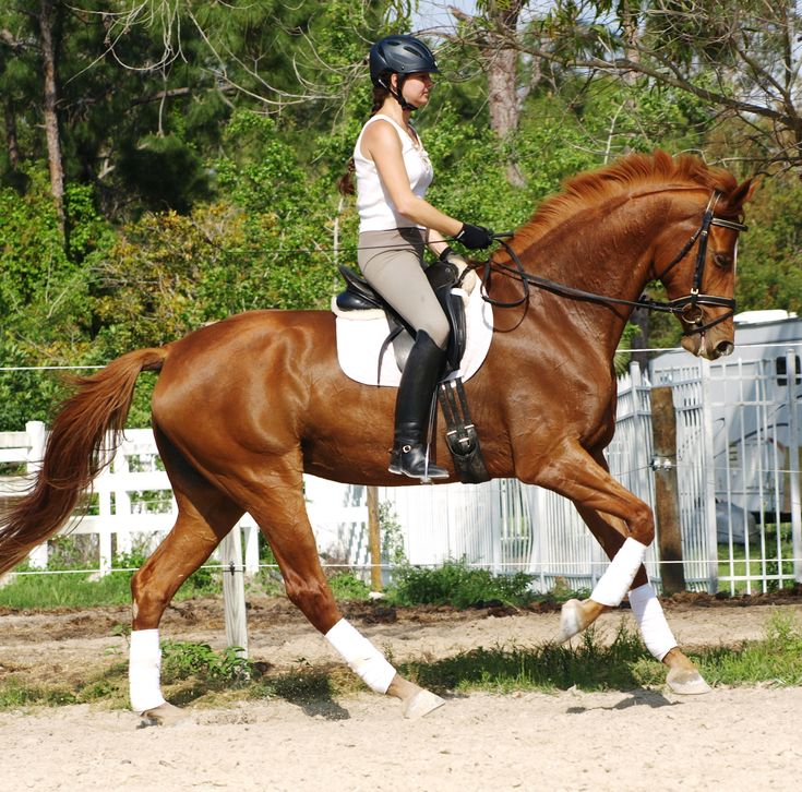 Red Hanoverian, rider: Irene Wiederhold www.HWfarm.com Selected Quality Horses for sale from only the best producing bloodlines. Horses are all sane and tractable with good manners and gorgeous conformation. All are well started and ready to continue on up the levels. Pics & videos!!!