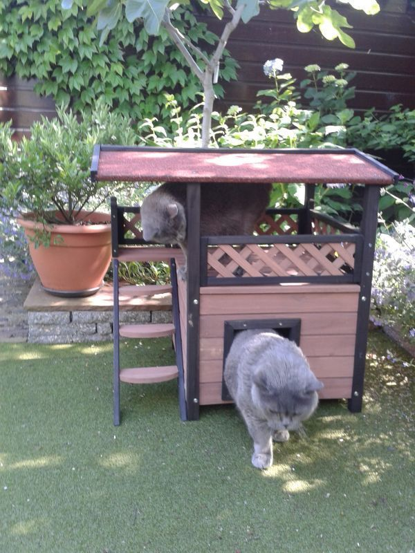 Outdoor Shelters For Pets : The best ideas about outdoor cat houses on pinterest