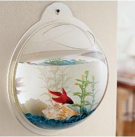 Hanging fish bowl!!