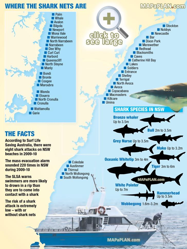 shark nets beaches surfing bondi bronte coogee manly palm whale bilgola avalon shelly Sydney top tourist attractions map