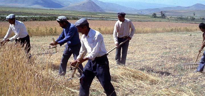 En çok ölüm tarım sektöründe