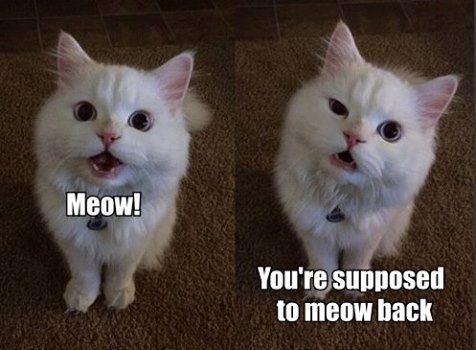 It'd be sad if a cat got so used to their human doing this, that they'd come to expect it and have this reaction.