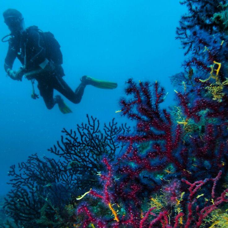 Ayvalık dalış okulu - ida dalış merkezi #scuba #scubadiving #diving #underwater #dalisnoktam #ayvalikdalis #ayvalikscuba #daliskursu #dalisokulu #ayvalık www.idadiving.com